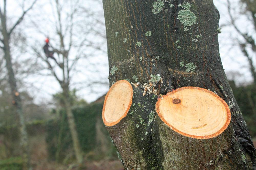 Taylors Tree Surgery