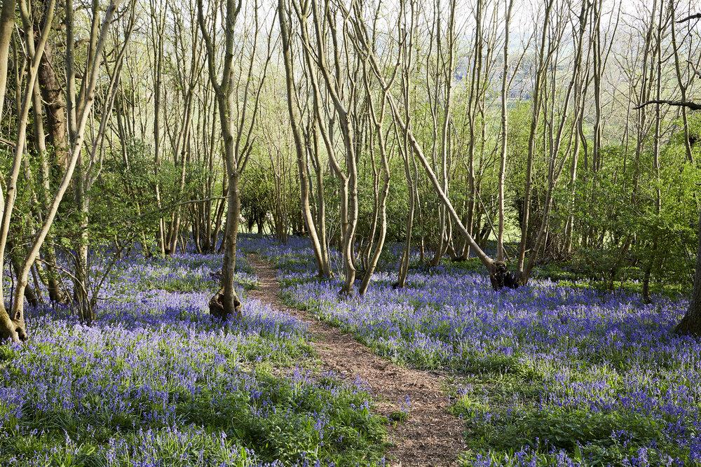 Shepherds Hut Walks Rye East Sussex
