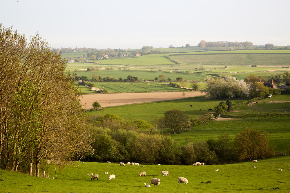 Shepherds Hut Landscape View Rye East Sussex