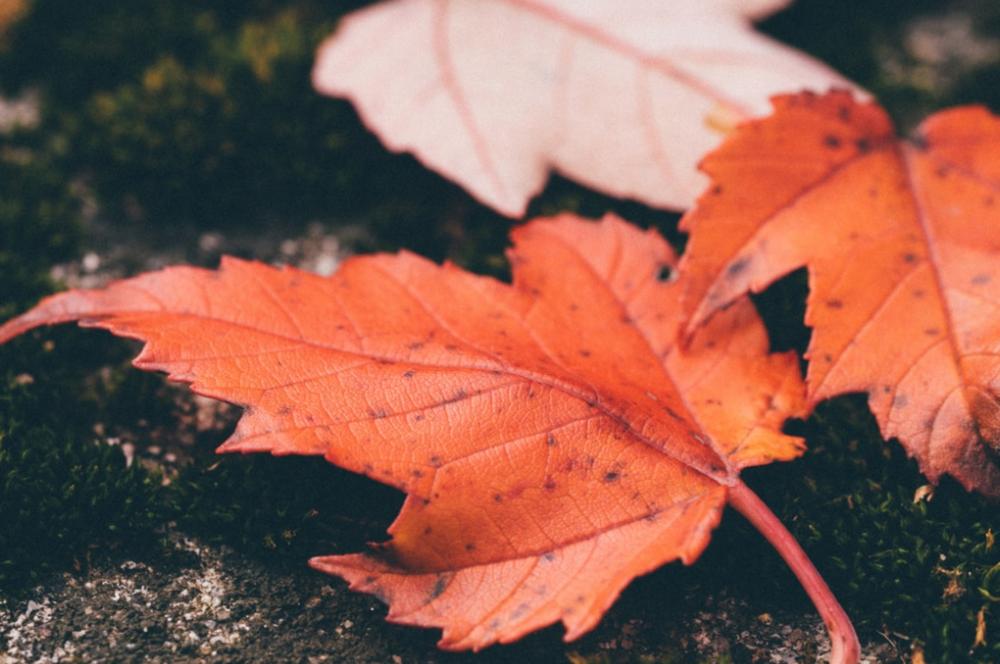 autumn_studio88_photopack