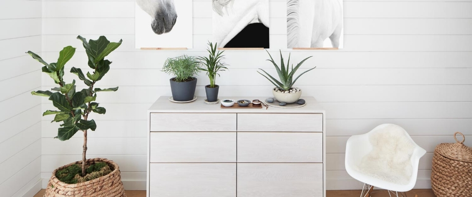 Can houseplants purify the air?
