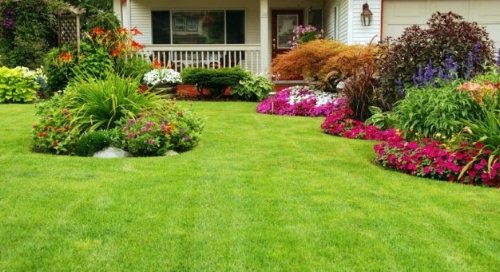 Tips for caring for your lawn in the summer