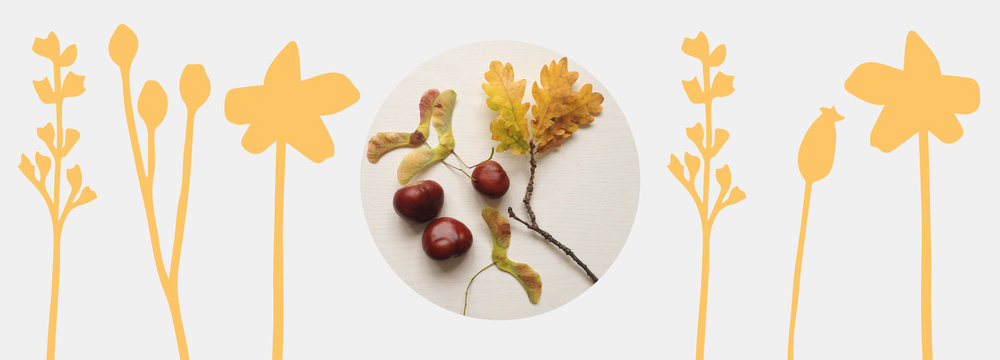 Anna_Wiscombe_Wooden_Wares_Seasonal_Page_Autumn_Finds.jpg