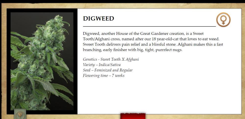 Digweed.png
