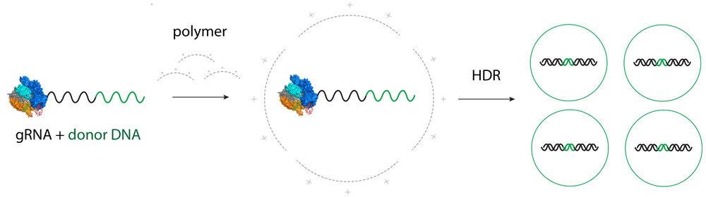 CRISPR_Engineering_v1.jpg