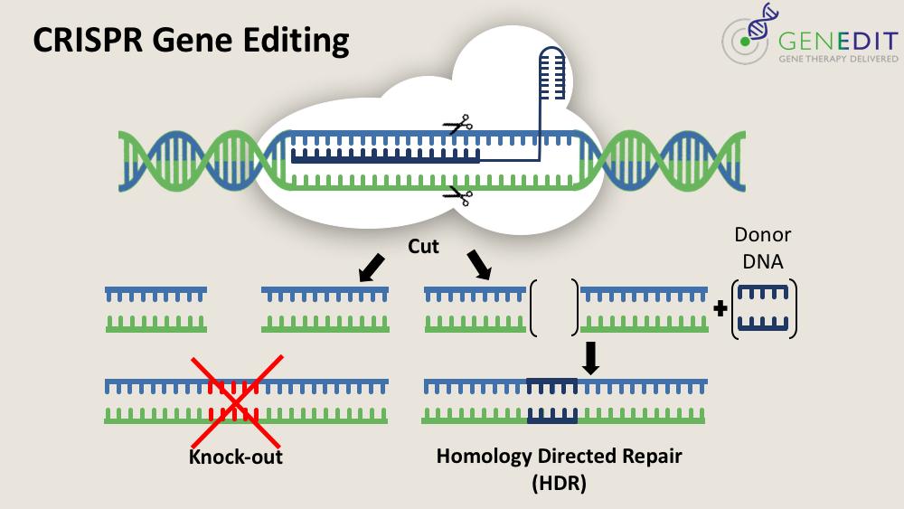 Cas9 editing scheme1 D.png