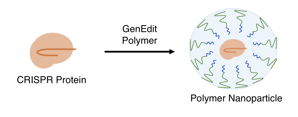 Protein delivery polymer.png
