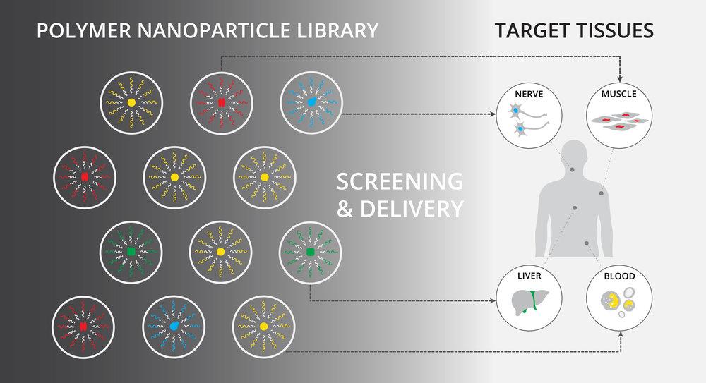 Nanoparticle_Screening_v2.jpg