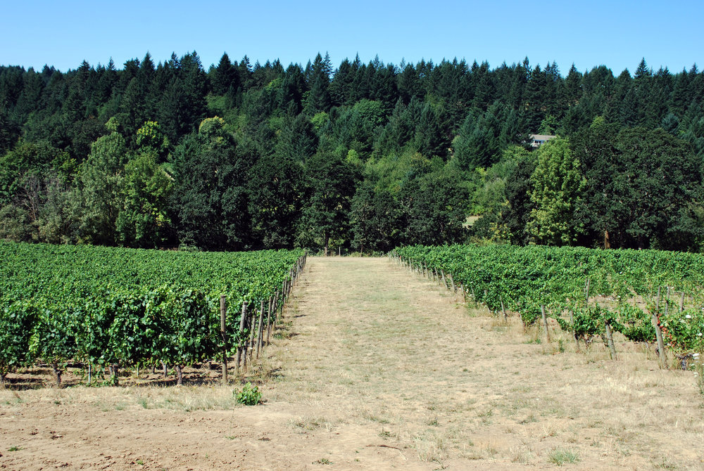 Chehalem Mtn Vineyard Blocks Aug 2016.jpg