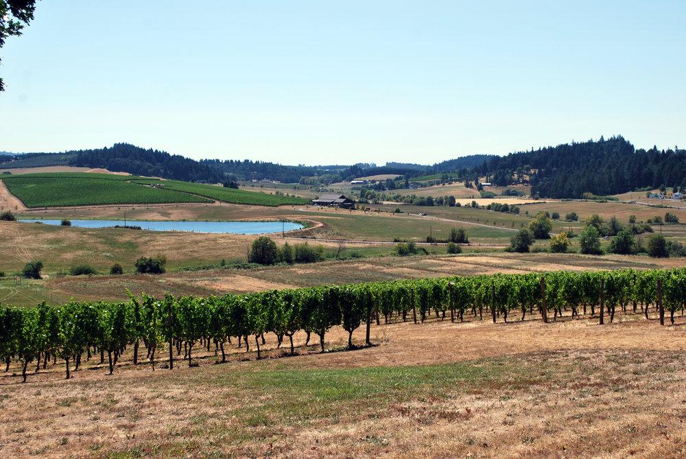 Deux Vert Vineyard August 2015 089.jpg