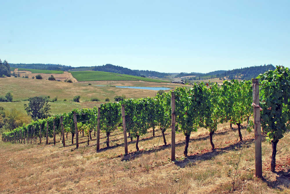 Deux Vert Vineyard 667 Block August 2015 089.jpg