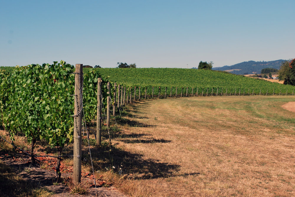 Holmes Gap Vineyard Block Aug 2016.jpg