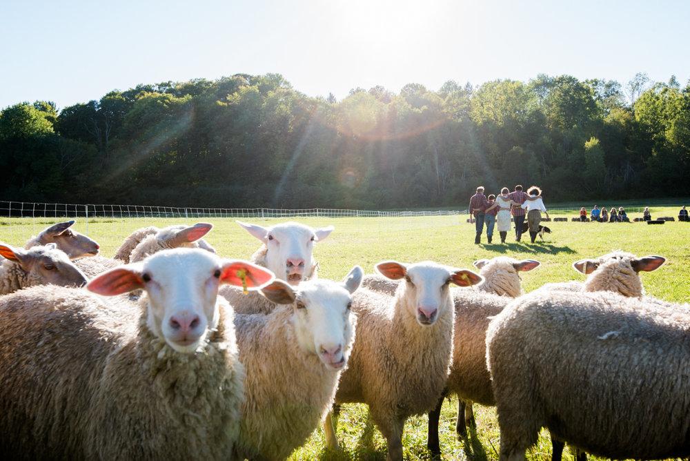 Flock in foreground, cast behind :sunlight.jpg