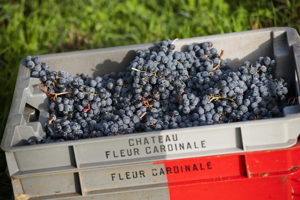 Fleur-Cardinale_2012-10_76.jpg
