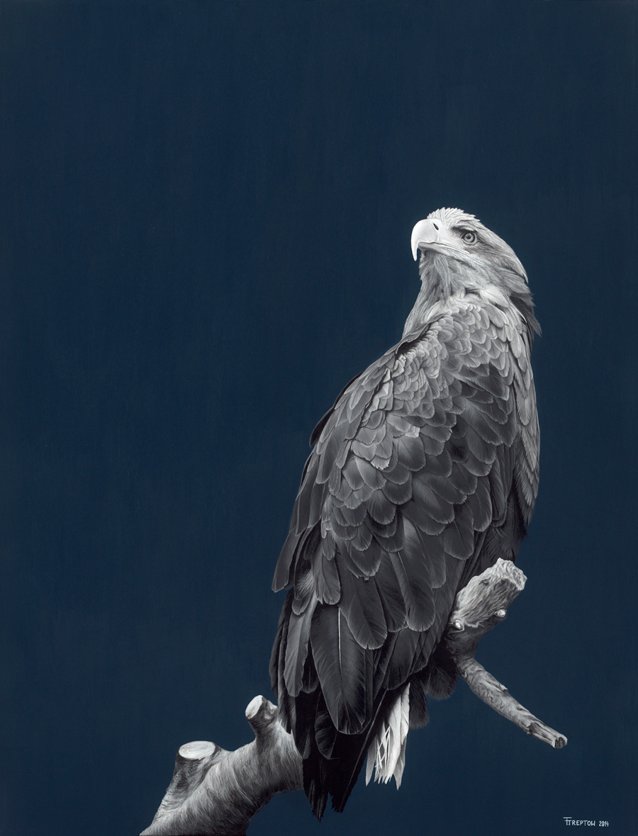 Eagle 2014 Acrylic on canvas 116cm x 89cm x 2cm