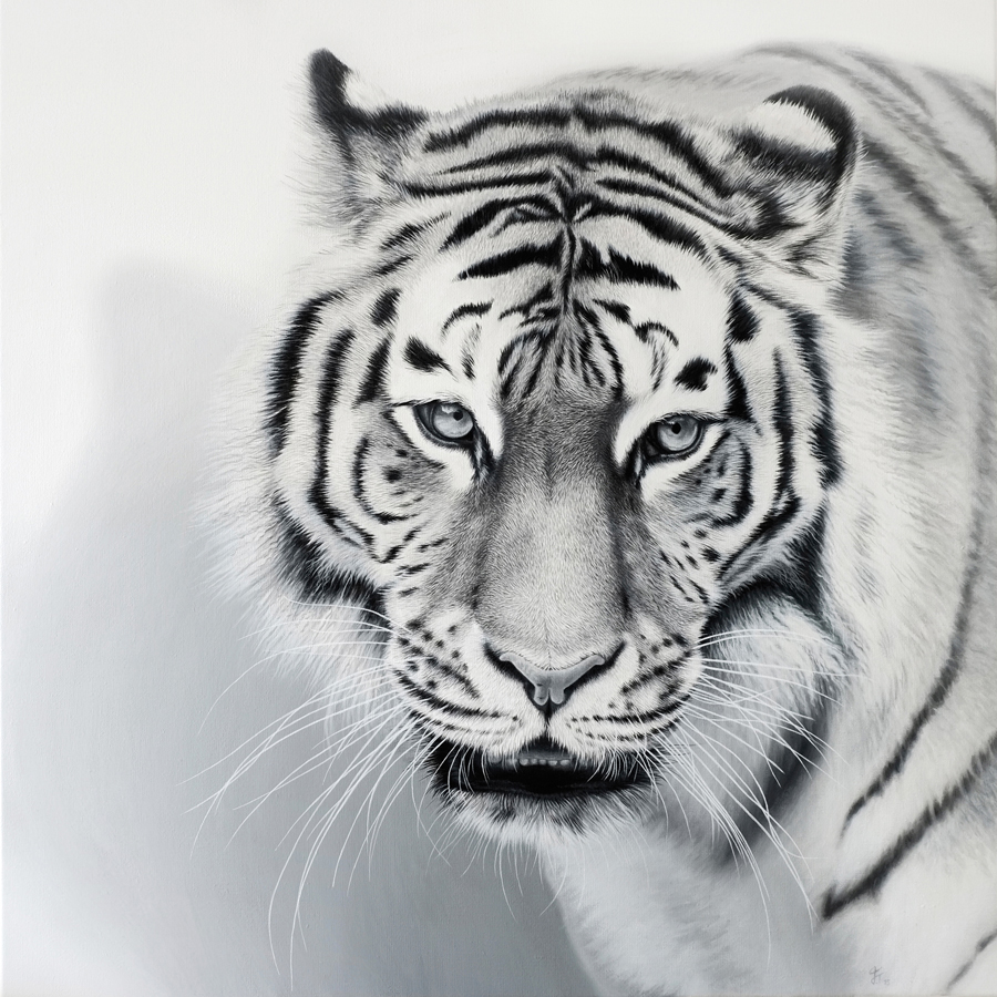 Tiger | SOLD 2015 Acrylic on canvas 80cm x 80cm x 2,5cm