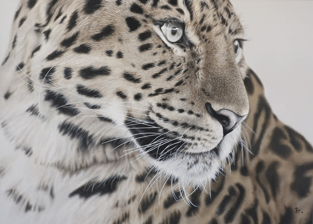 Leopard | SOLD      2016    Acrylic on canvas  50cm x 70cm x 3cm