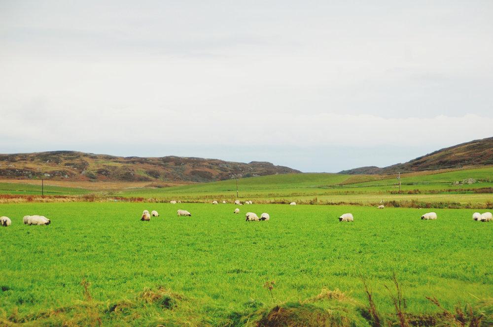 10.16.scotland.131.jpg