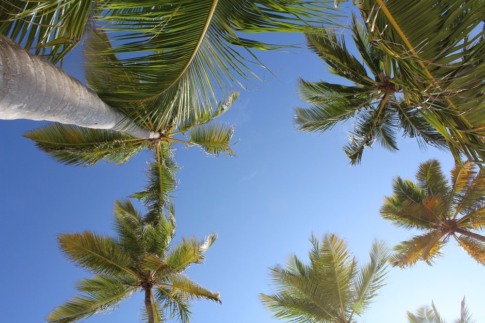palms-1012118_1280.jpg