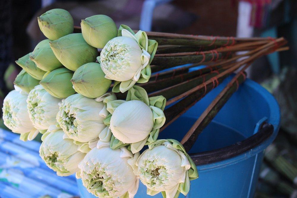 lotus-flowers-1574424_1280.jpg