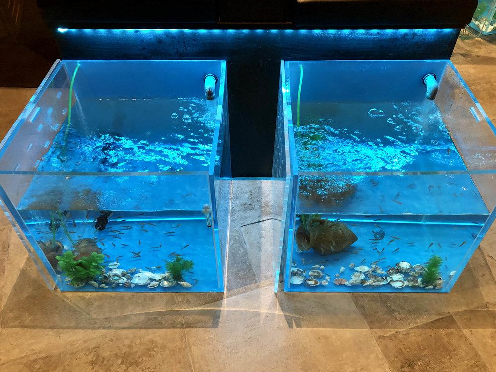 fisk1.jpg
