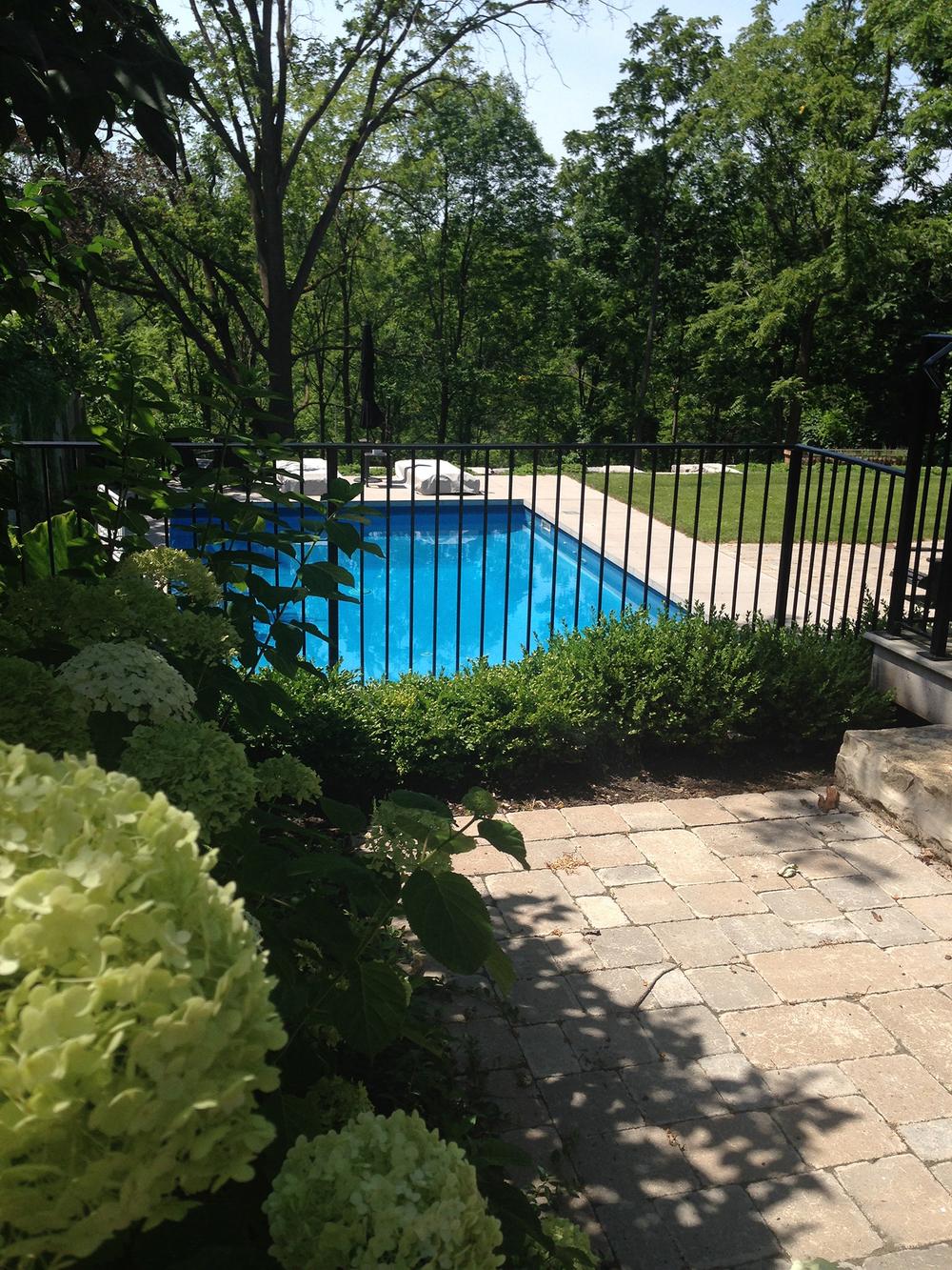 Rebecca Montemurro's Garden