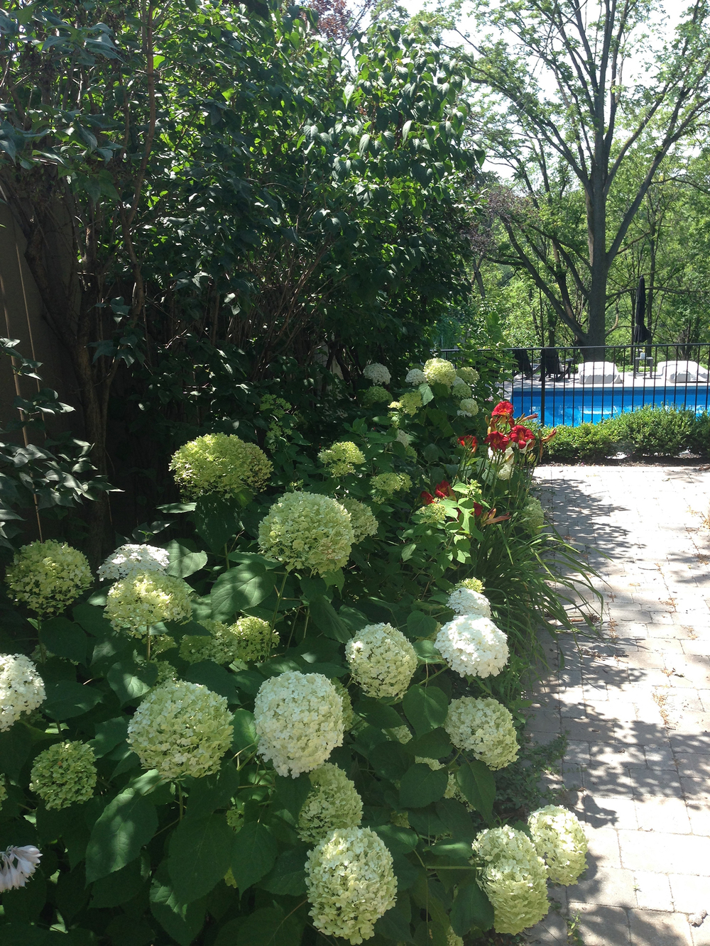 Artist Rebecca Montemurro's garden.