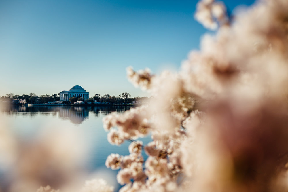 Monument-DC-CherryBlossoms-Flower-TidalBasin-DOF