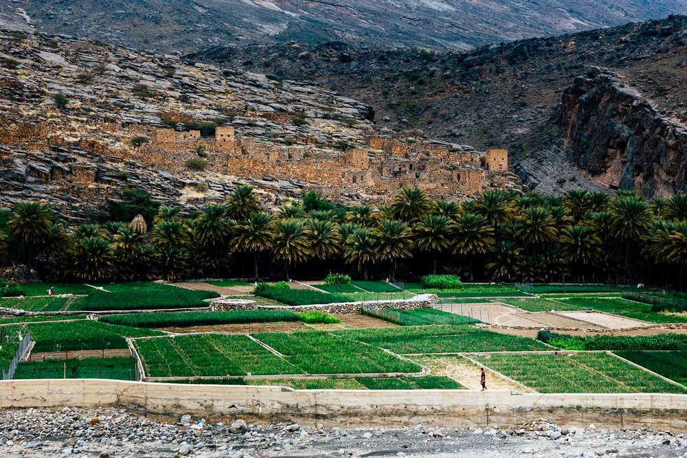 Green-Fields-Agriculture-Tradition-Walking-Rural-Oman-MiddleEast-Durazo-Photography.jpg