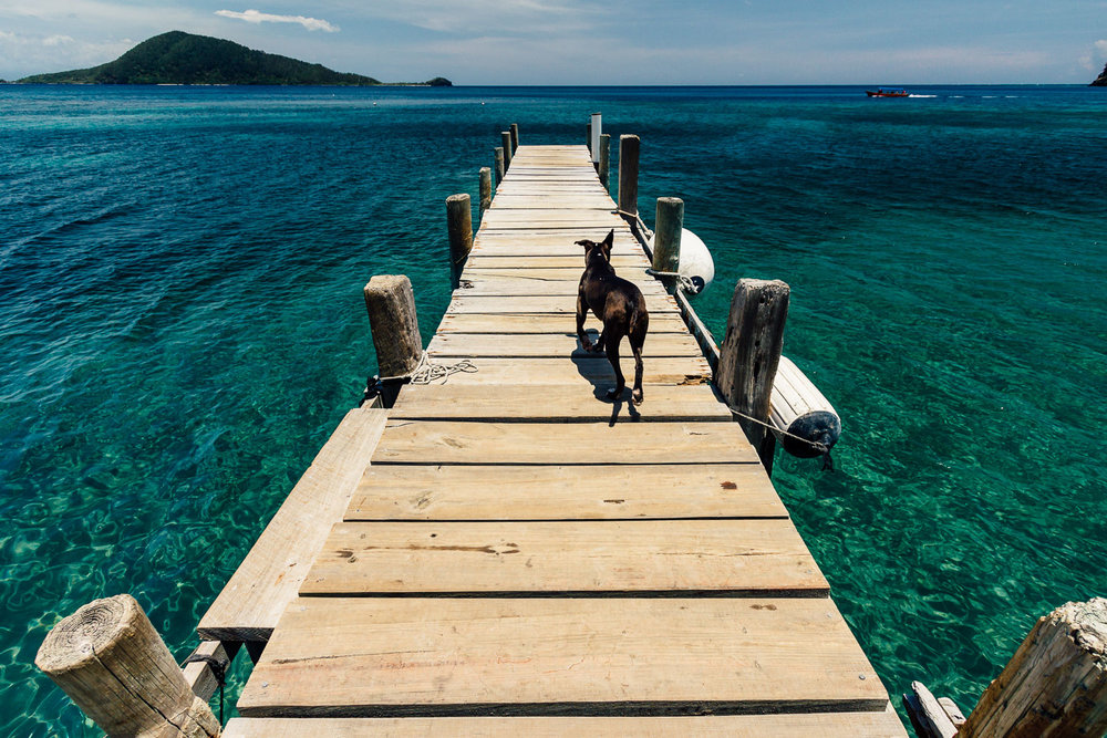 Dock-Turquoise-Water-Dog-Tropical-Island-Honduras-CentralAmerica-Durazo-Photography
