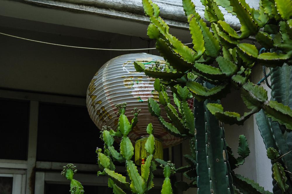 Chiang Mai Thailand cactus cacti paper lanter