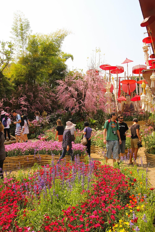 Chiang Mai Thailand wat temple Buddhism flowers lanterns