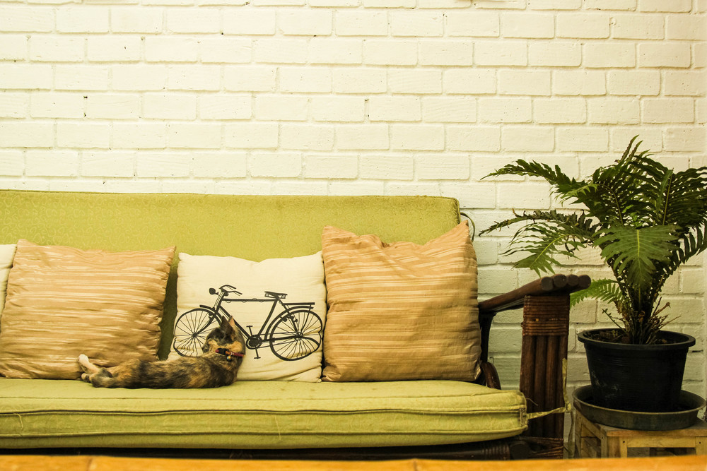 Chiang Mai Thailand Bay's Cafe cat kitten green couch sofa white wall