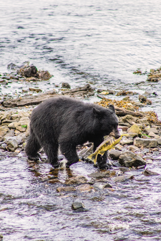Alaska-115.jpg