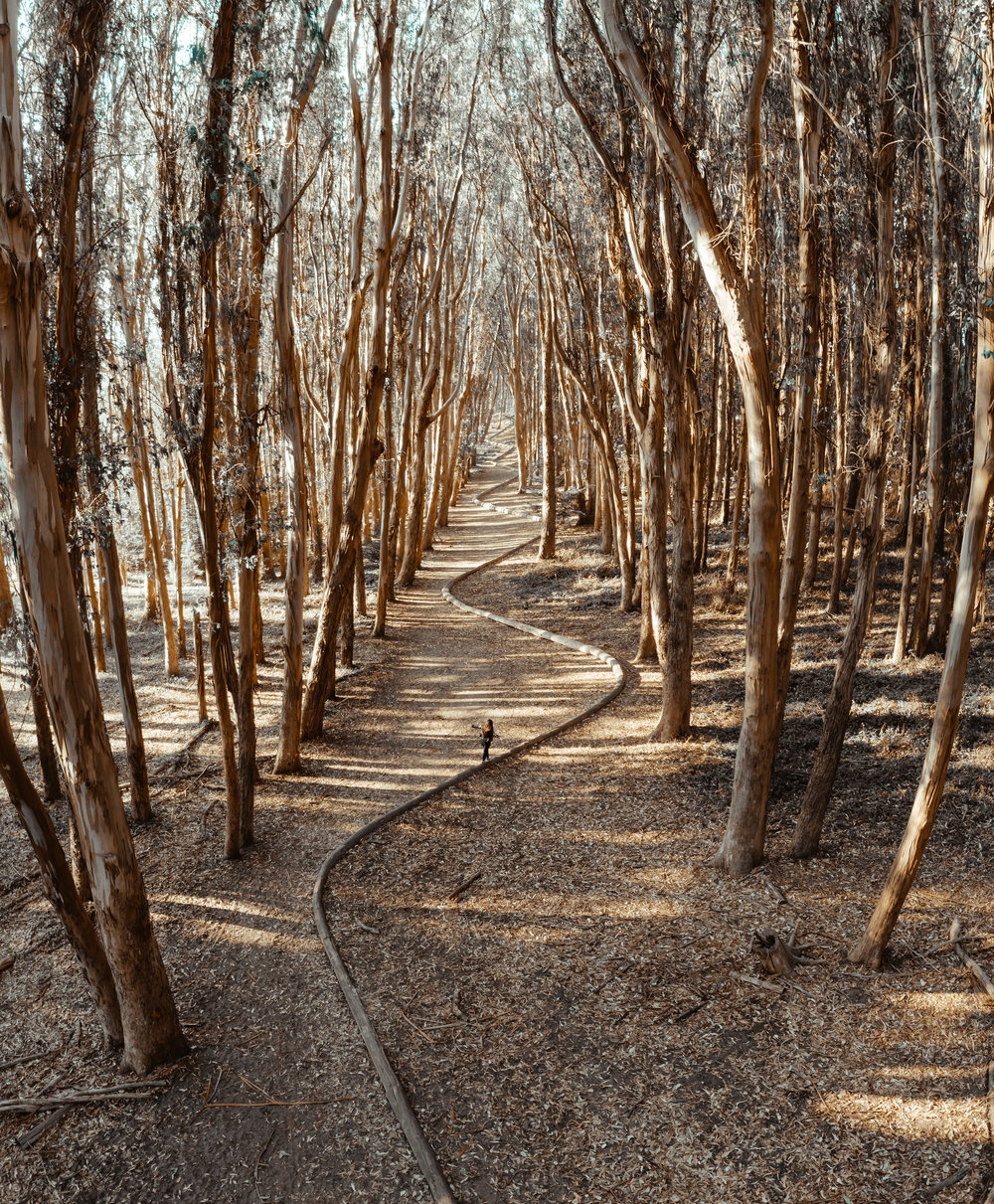 presidio-woodline-edits-1.jpg