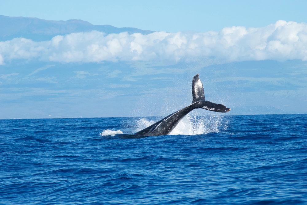 Whale Watching Brisbane - Abigail Lynn