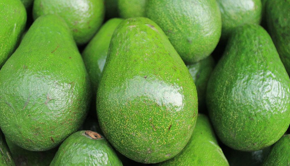 Avocado Grow seeds with kids