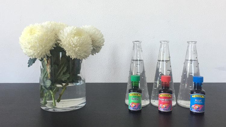 Mini\'s Science Corner: Flower & Food Dye Experiment — Mini Nanny Agency