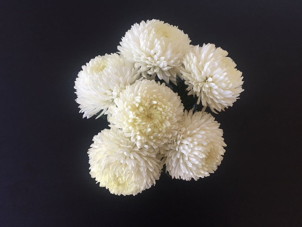 Mini's science corner- white flowers