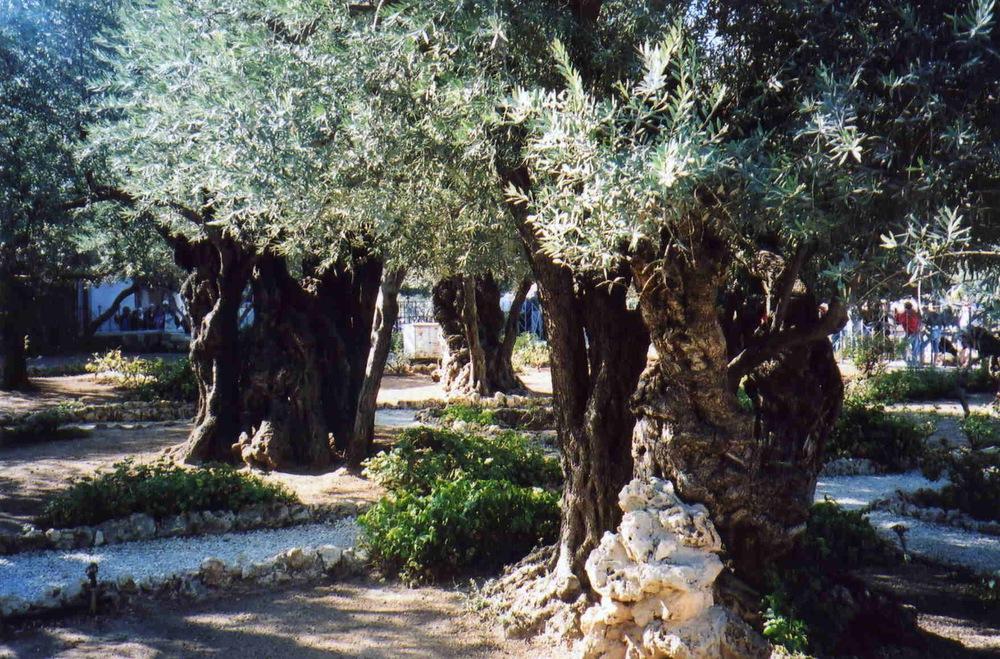 Israel Pics - 451.jpg