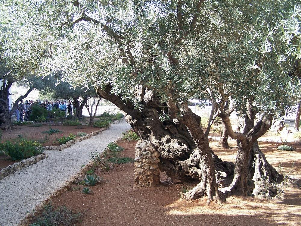 Israel Pics - 413.jpg
