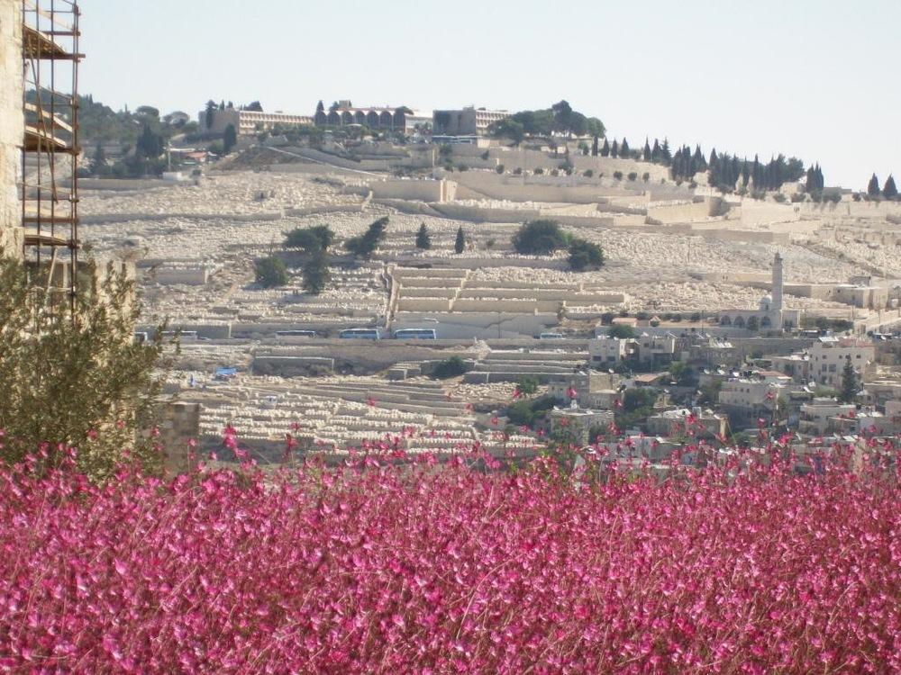 Israel Pics - 444.jpg