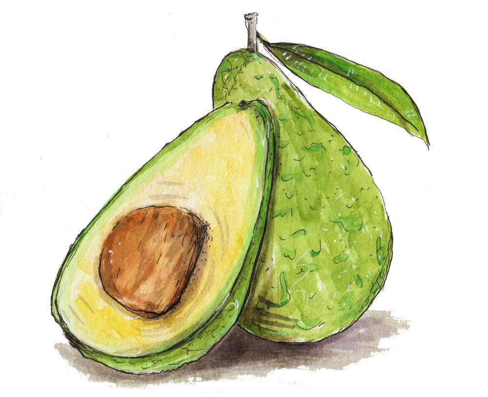 Avocado+#1+JPG+8-12-14.jpg