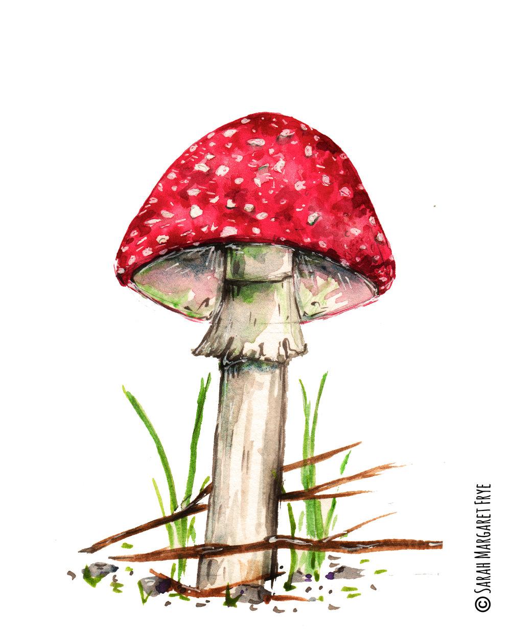 deathcap Mushroom postcard aug 2017 copywrite.jpg