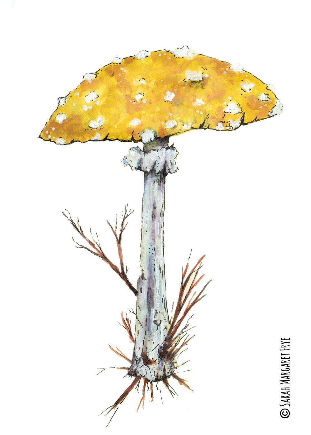 Yellow Mushroom copywriteok.jpg
