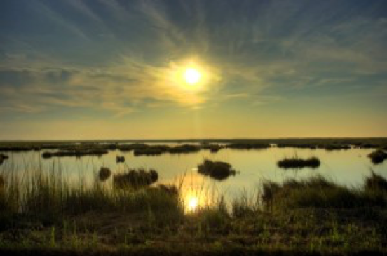 Marshlands at Blackwater NWR. via conservationfund.org. Photo by Nikographer/ www.nikographer.com