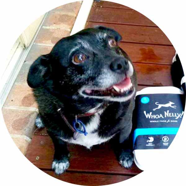 Mika from Ballina loving Whoa Nelly Raw Dog Food