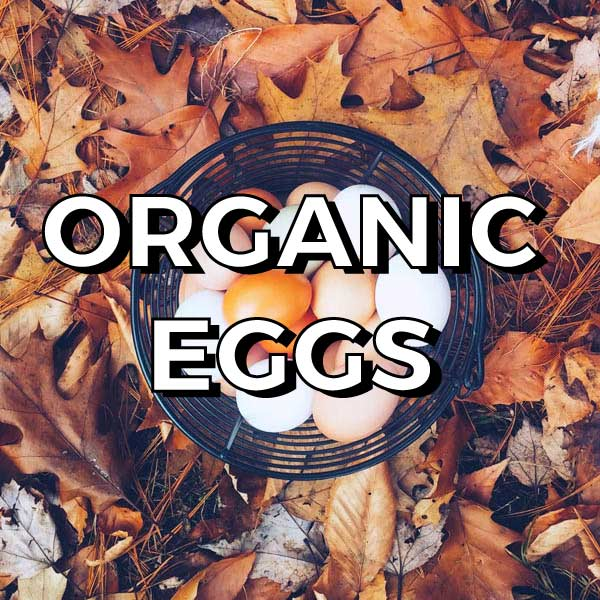 Eggs are a  complete  food, and an excellent source of amino acids - the building blocks of protein. Eggs are easily digested and help make a  shiny glossy coat .