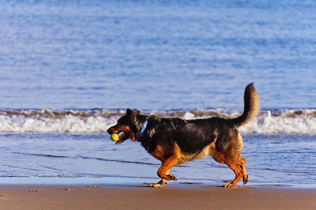 dogs-708354_640.jpg