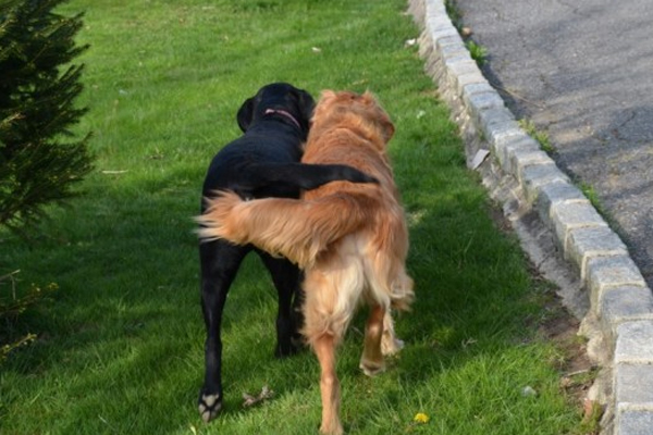 dog-2183018_640.jpg